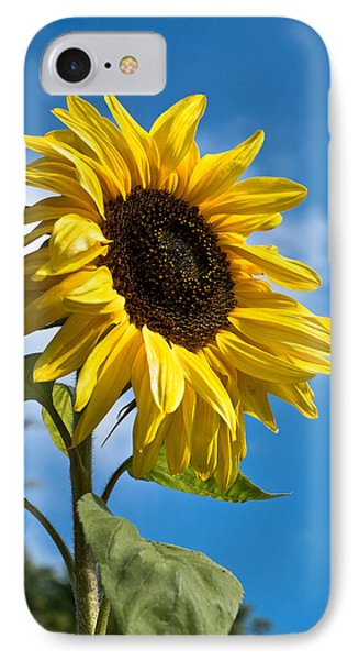 Sunflower IPhone Case by Scott Carruthers