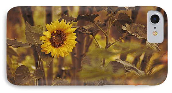 IPhone Case featuring the photograph Sunflower Sentry by Douglas MooreZart