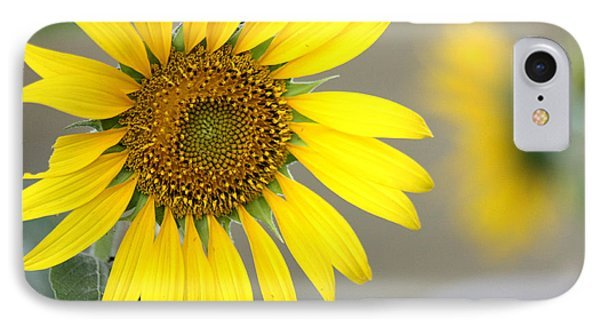 IPhone Case featuring the photograph Sunflower by Sheila Brown