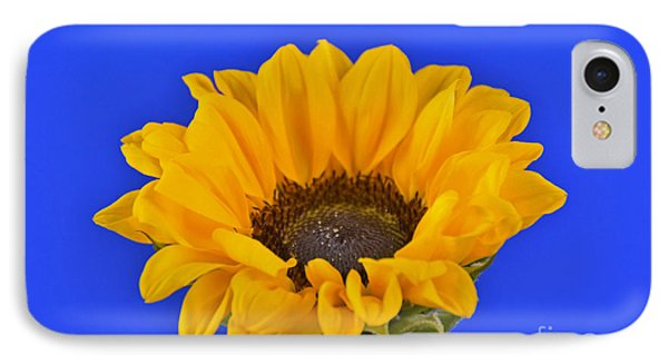 Sunflower Sunshine 406-6 IPhone Case by Ray Shrewsberry