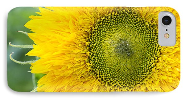 Sunflower Superted IPhone Case by Tim Gainey