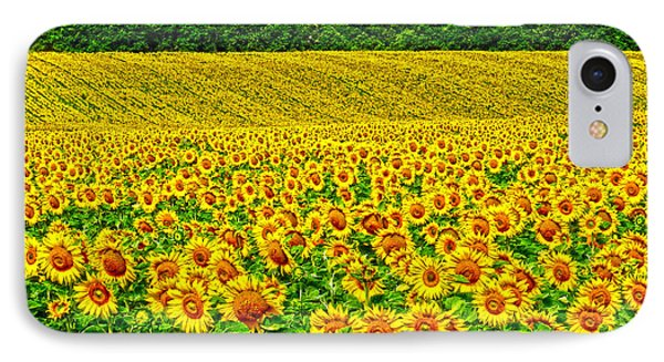 Sunflower IPhone Case by Thomas M Pikolin