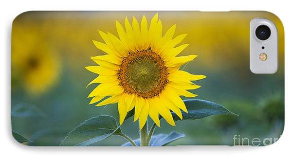 Sunflower iPhone 7 Case - Sunflower by Tim Gainey
