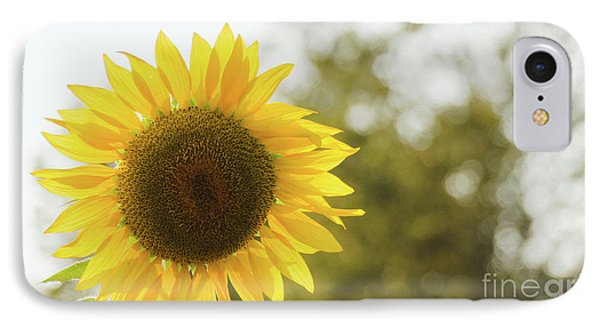 IPhone Case featuring the photograph Sunflowers 12 by Andrea Anderegg