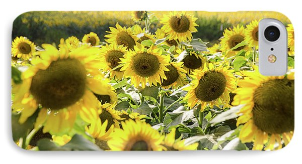 IPhone Case featuring the photograph Sunflowers 13 by Andrea Anderegg