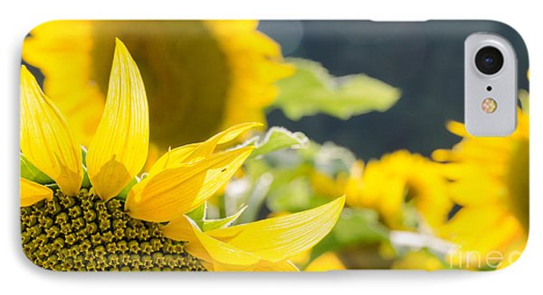 IPhone Case featuring the photograph Sunflowers 14 by Andrea Anderegg