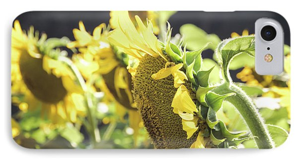 IPhone Case featuring the photograph Sunflowers 4 by Andrea Anderegg