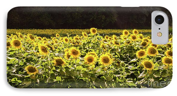 IPhone Case featuring the photograph  Sunflowers 5 by Andrea Anderegg