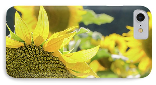 IPhone Case featuring the photograph  Sunflowers 8 by Andrea Anderegg