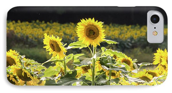 IPhone Case featuring the photograph Sunflowers 9 by Andrea Anderegg