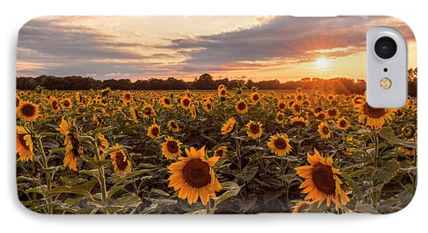 Sunflowers At Sunset IPhone Case by Scott Bean
