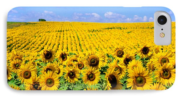 Sunflowers Phone Case by Bill Bachmann and Photo Researchers