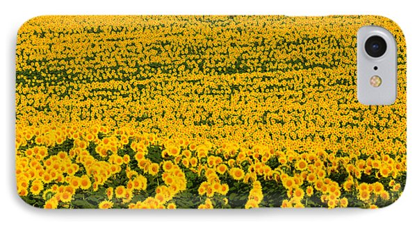 Sunflowers Galore IPhone Case by Catherine Sherman