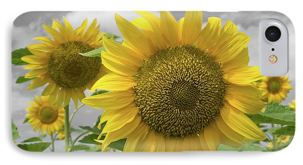Sunflowers IIi IPhone Case