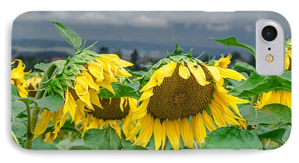 Sunflowers On A Rainy Day IPhone Case by Michelle Meenawong