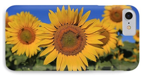 Sunflowers On A Summer Morning IPhone Case