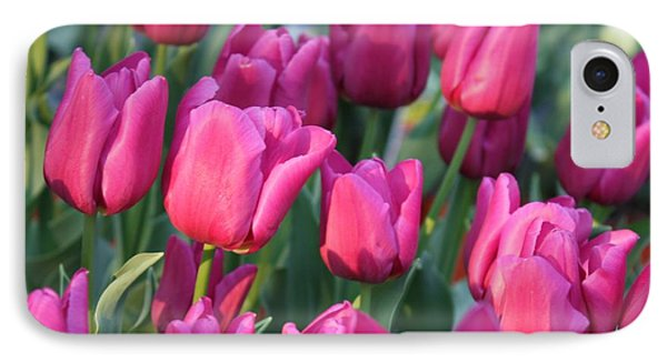 Sunlight On Pink Tulips IPhone Case by Carol Groenen