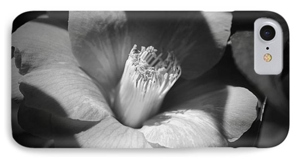 Sunlit Camellia - Black And White Nature IPhone Case by Carol Groenen