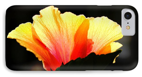 Sunlit Hibiscus IPhone Case by Diane Merkle