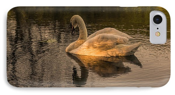 Sunlit Mute Swan  IPhone Case by David  Hollingworth