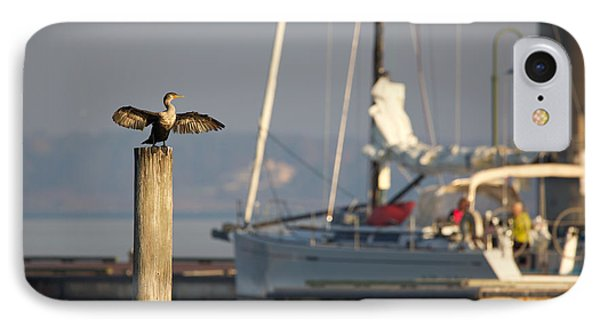 Sunning Cormorant In The Morning IPhone Case by Rachel Morrison