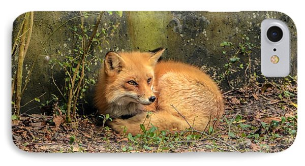 Sunning Fox IPhone Case by Debbie Green