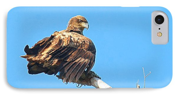 IPhone Case featuring the photograph Sunning Out On A Limb by Debbie Stahre