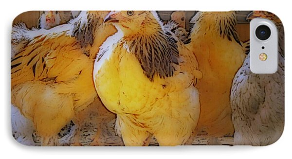 Sunny Chicks IPhone Case by Ruanna Sion Shadd a'Dann'l Yoder