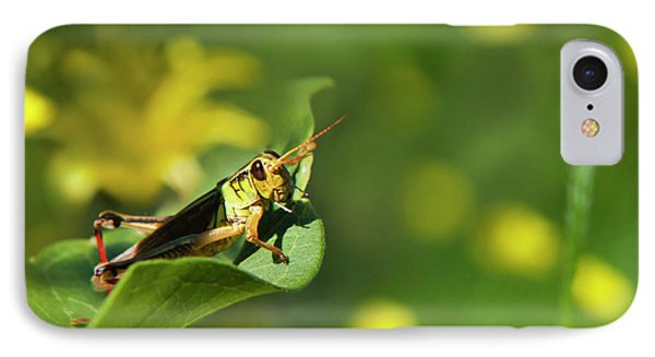 Green Grasshopper IPhone 7 Case by Christina Rollo