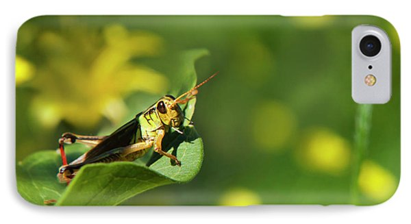 Green Grasshopper IPhone Case by Christina Rollo