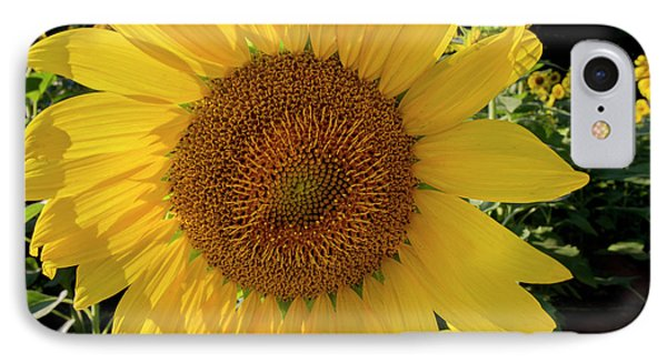 IPhone Case featuring the photograph Sunny Side Up by Chris Scroggins