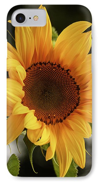 IPhone Case featuring the photograph Sunny Sunflower by Jordan Blackstone