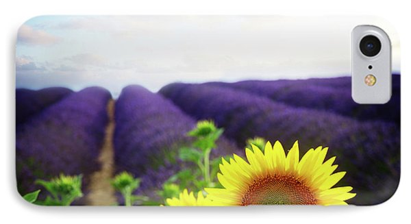 Sunrise Over Sunflower And Lavender Field IPhone Case by Anastasy Yarmolovich