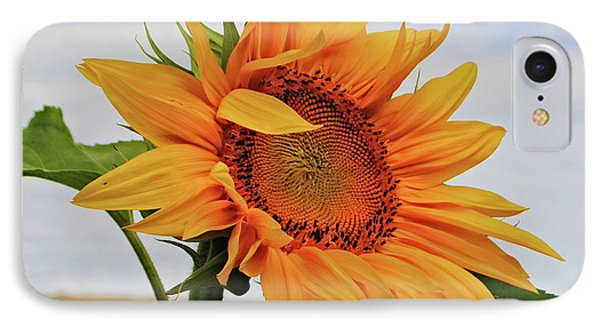 Sunrise Sunflower IPhone Case by Kathleen Sartoris