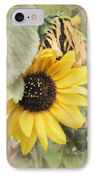 Last Sunflower IPhone Case by Cindy Garber Iverson