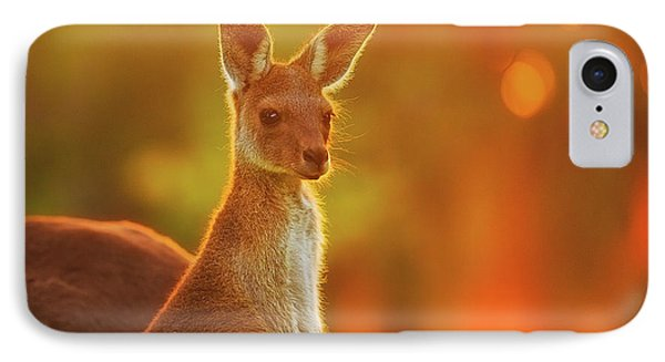 Sunset Joey, Yanchep National Park IPhone Case by Dave Catley