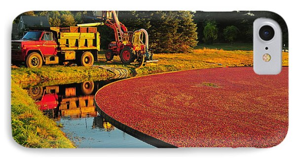 Sunset Over Cranberry Bog IPhone Case by Catherine Reusch Daley