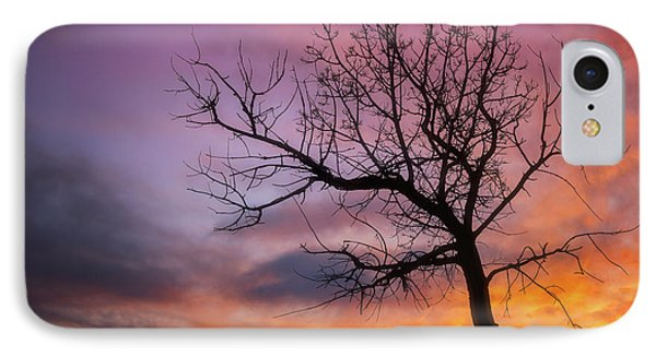 IPhone Case featuring the photograph Sunset Tree by Darren White