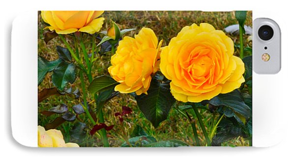 IPhone Case featuring the photograph Sunshine by Karo Evans