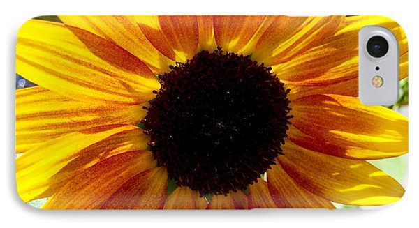 Sunshine Sunflower IPhone Case by Russell Keating