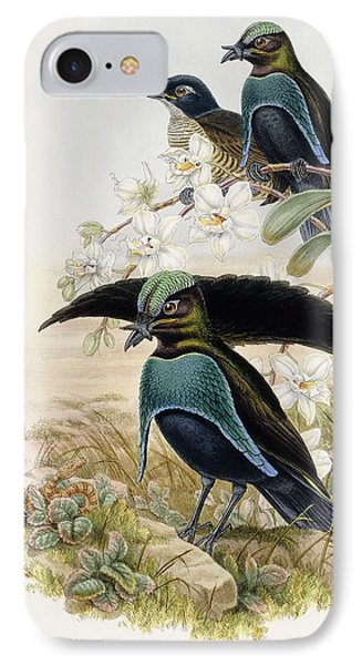 Superb Bird Of Paradise  IPhone Case by John Gould