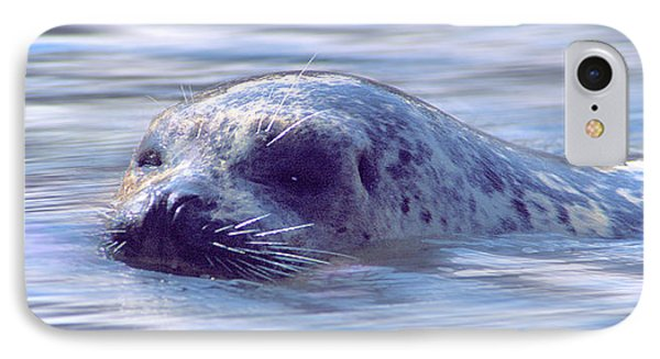 Surfacing Seal IPhone Case by Greg Slocum