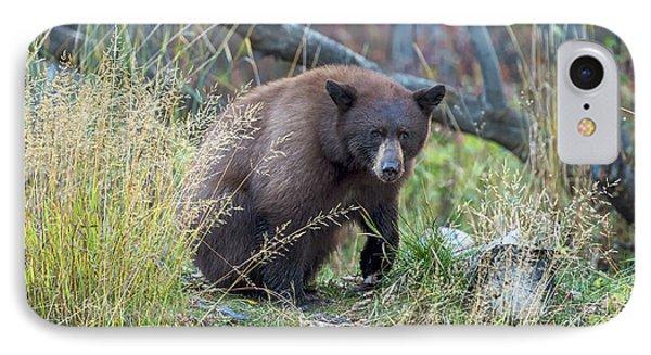 Surprised Bear IPhone Case