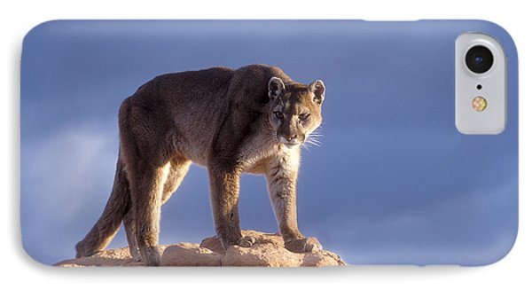 Surveying The Territory Phone Case by Sandra Bronstein