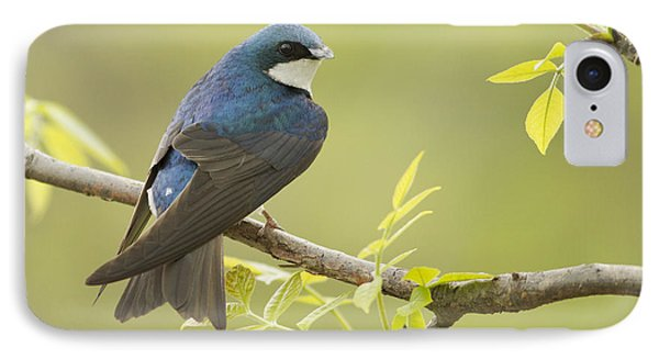 Swallow IPhone Case by Mircea Costina Photography