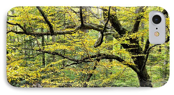 Swamp Birch In Autumn Phone Case by Thomas R Fletcher