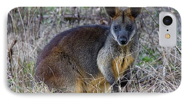 IPhone Case featuring the photograph Swamp Wallaby  by Miroslava Jurcik