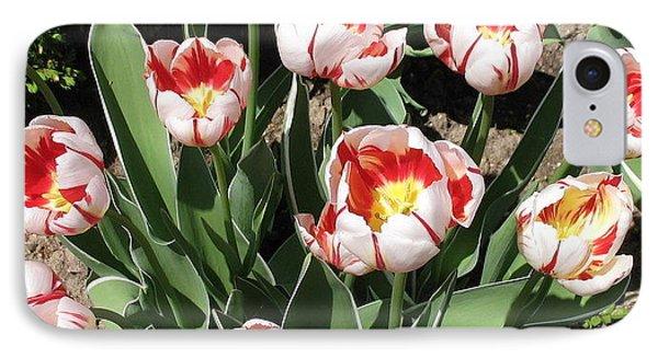 IPhone Case featuring the photograph Swanhurst Tulips by Jolanta Anna Karolska