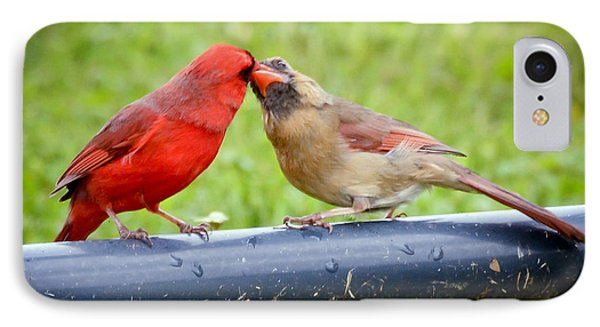 Sweet Cardinal Couple IPhone Case by Kerri Farley