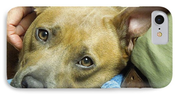Sweet Pit Bull . Face Of Love IPhone Case by Renee Trenholm
